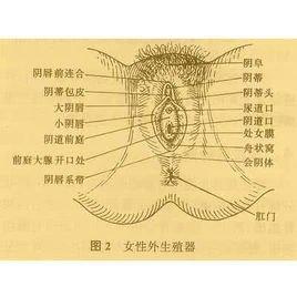 外阴白斑女生症状的自慰卫生间图片