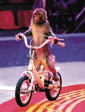 小猴子骑自行车的图片-母亲与孩子骑自行车图片