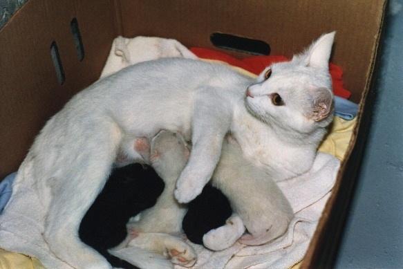 动物大张素描临摹图片