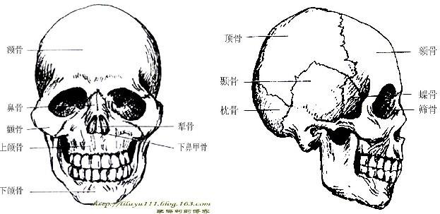 头部骷髅图片素材