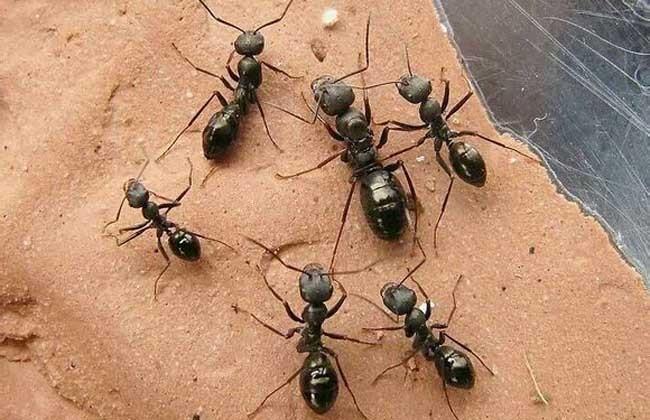 蚁点按摩椅电路图