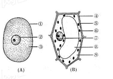 下图为细胞结构示意图,请据图回答:(1)图所示为植物细胞结构.