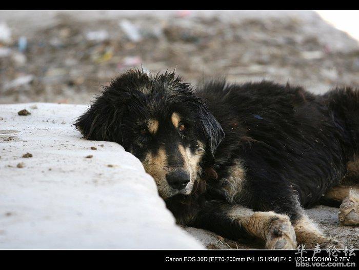 丧家之犬是什么意思