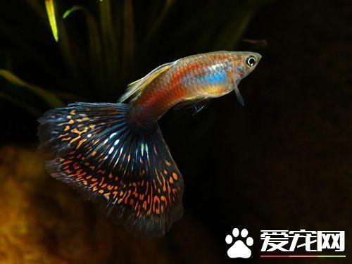 什么观赏鱼最好看既好看又易养的品种