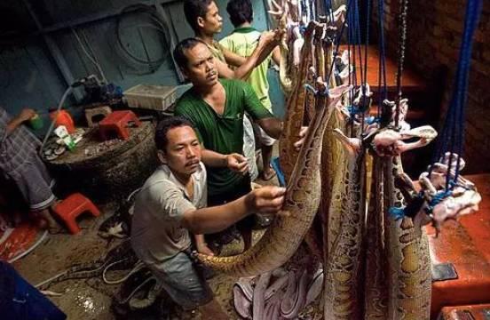 蟒蛇皮加工厂图片