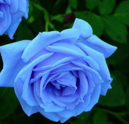 水粉畫黑板報藍色妖姬