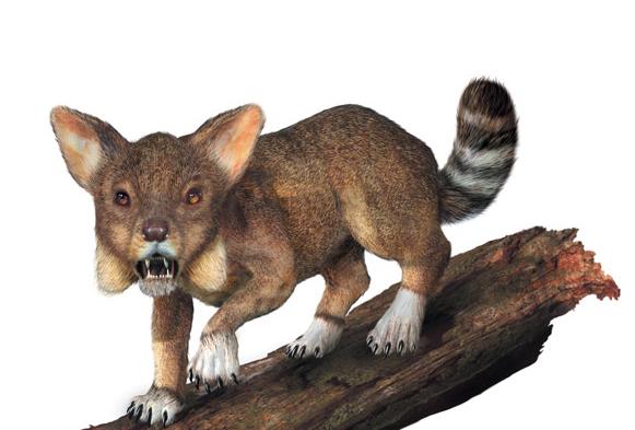 现代食肉动物的共同祖先开始