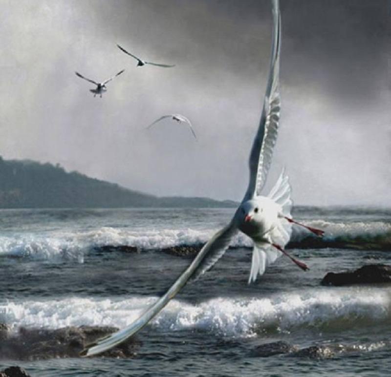 海燕英文纹身图案