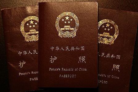 小动物护照手抄报