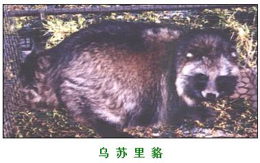 全国珍贵毛皮动物良种繁育基地